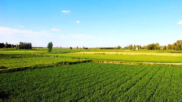 了解 | 农业保险你买了吗?每亩能赔多少钱?