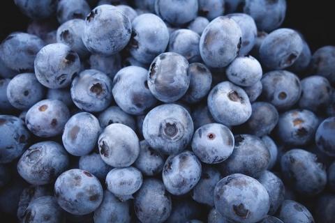 2020全球蓝莓贸易增长超16% 预计今年蓝莓产量还将显著增加