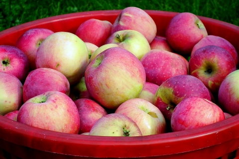 2020年中国苹果出口增长9%,重回100万吨