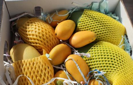 江苏无锡:时令水果轮番上市
