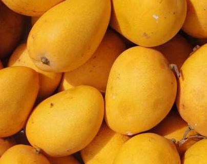 芒果供应量大 价格下跌趋势明显