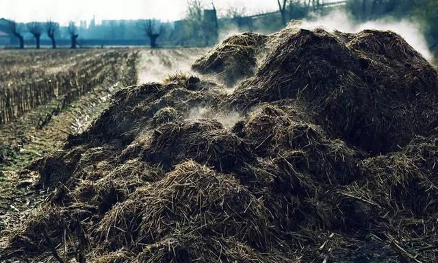 農業農村部:嚴禁畜禽糞直接還田!否則嚴查!