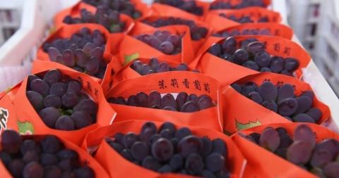 大棚葡萄搶鮮上市,售價可達50元/斤