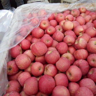 一季度龍口出口蘋果翻番