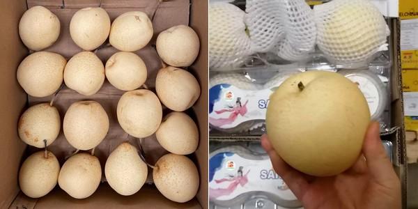 海运费用上涨限制了本季鲜梨的出口优势