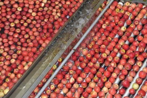 南非苹果对华出口量翻番,创下历史新纪录